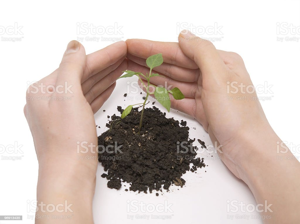 plant and hand roof royalty-free stock photo