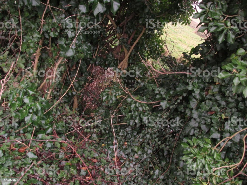Plant and Nature Tunnel royalty-free stock photo