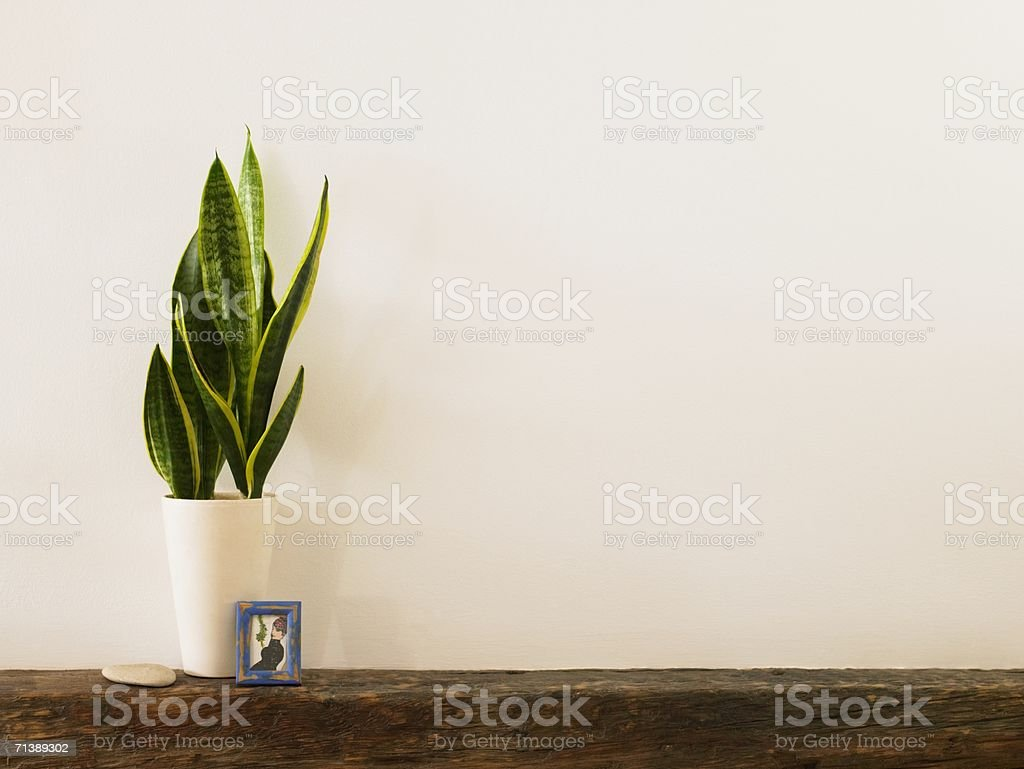 Plant and picture on a mantelpiece stock photo