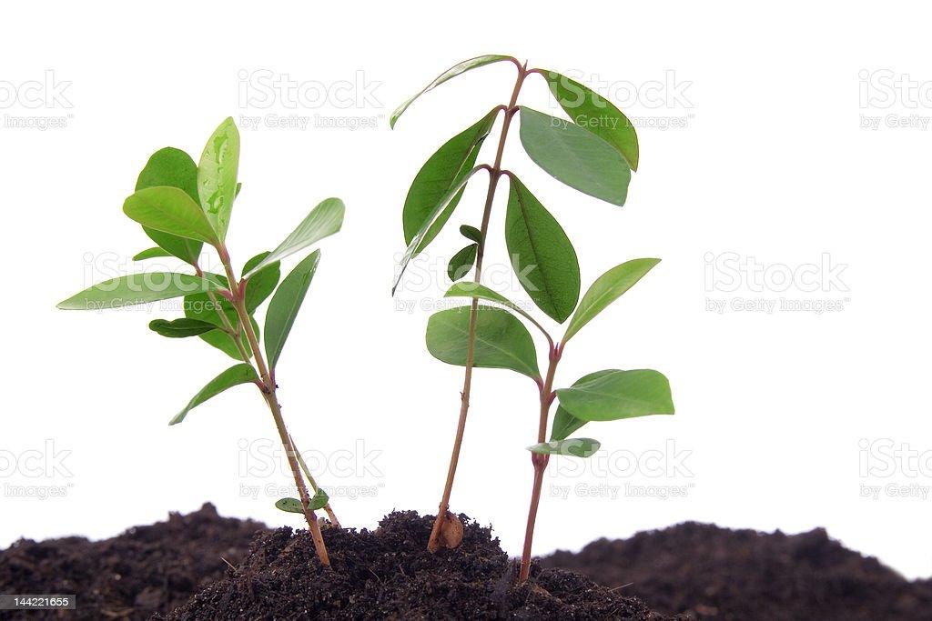 Plantas e Solo - fotografia de stock