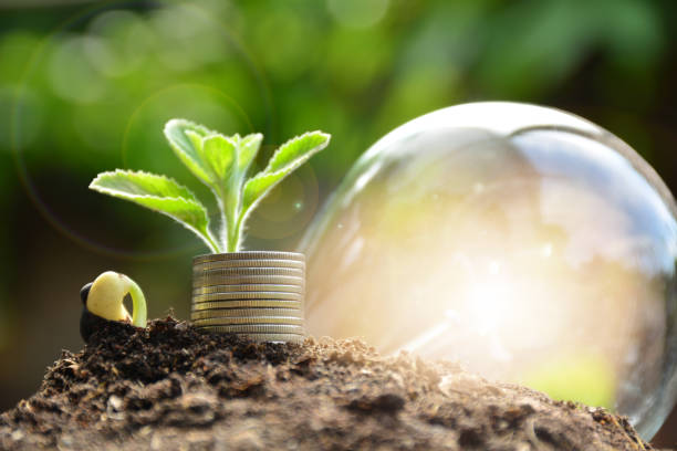 Plant and stack coins feeling success finance, nature background stock photo