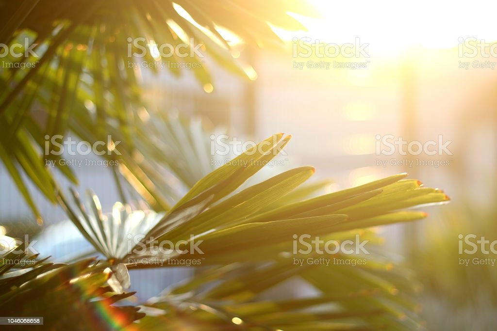 Plant and Sunset stock photo