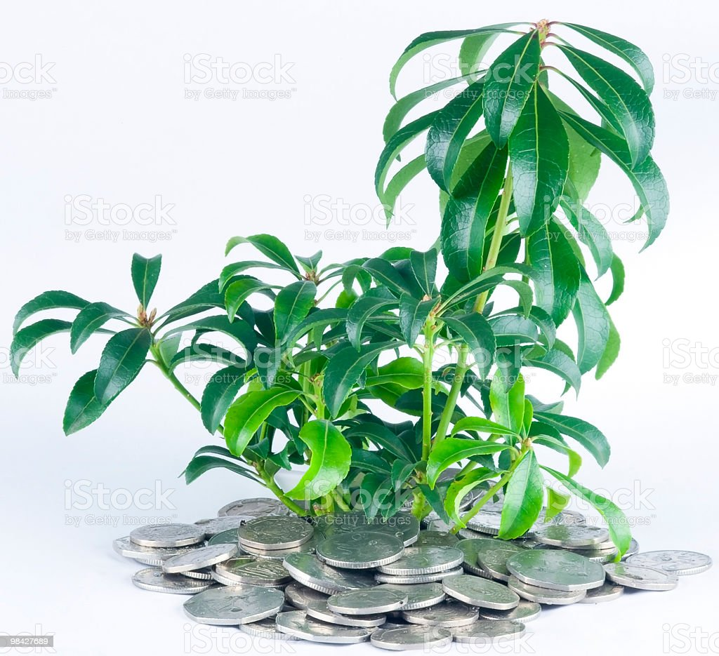 Plant and UK Coins royalty-free stock photo