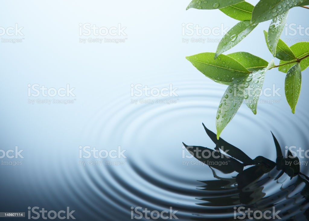 plant and water stock photo