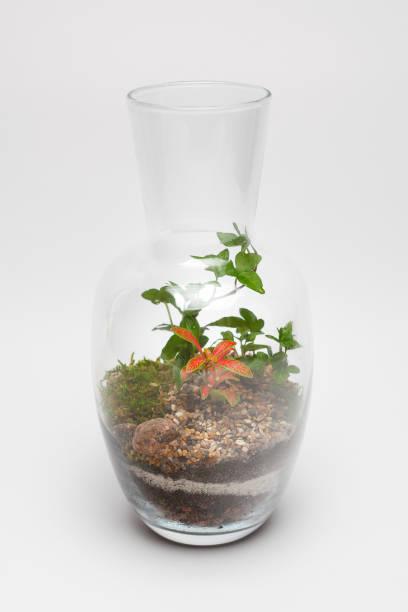pflanze-anordnung in einer glasvase (terrarium) - indoor feen gärten stock-fotos und bilder