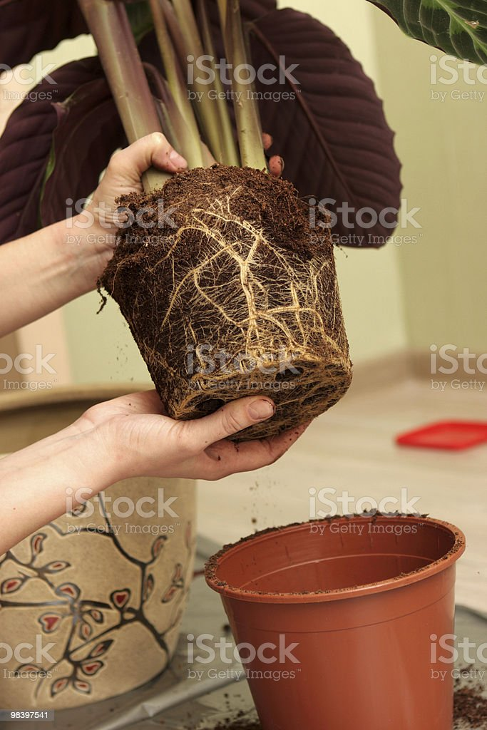 Plant at home royalty-free stock photo