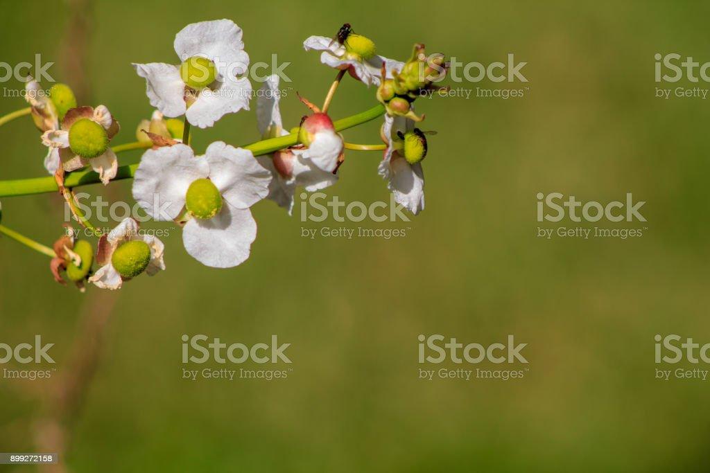 Plant Background 1 stock photo