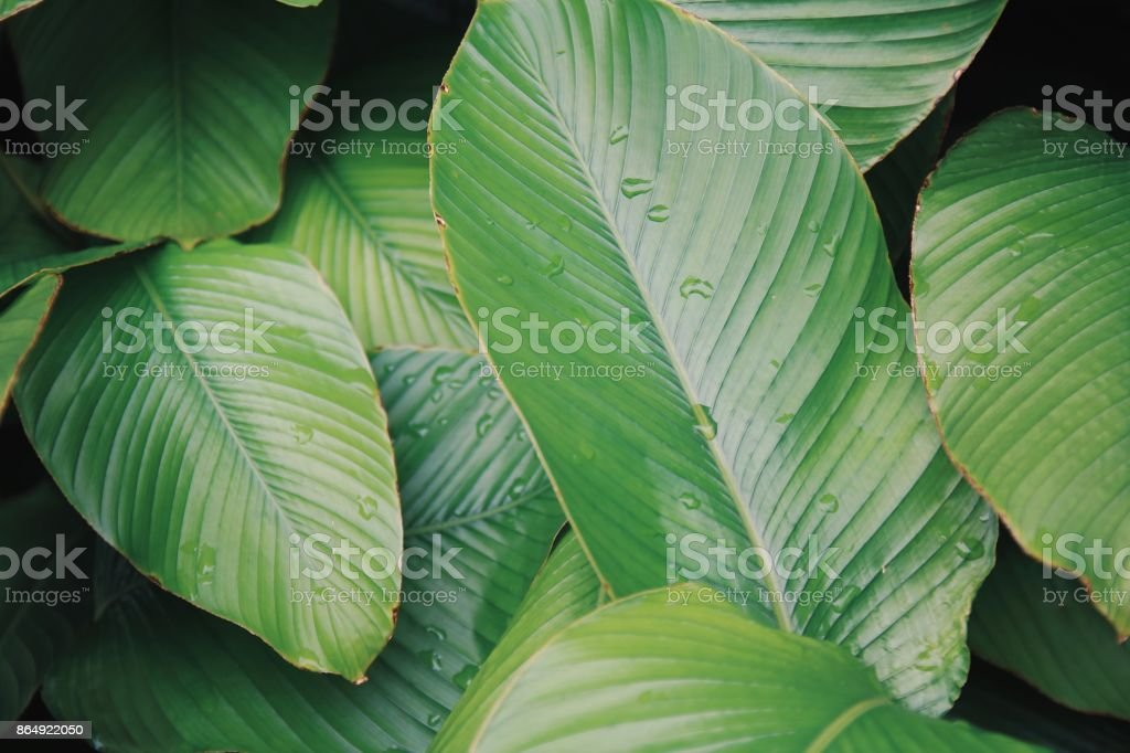Plant background stock photo