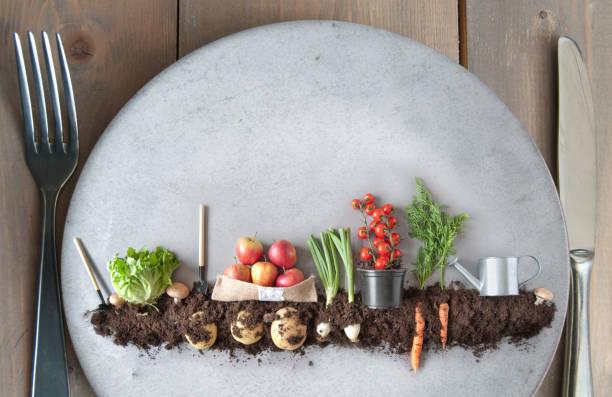 koncepcja diety oparta na roślinach, ogród organiczny - jedzenie wegetariańskie zdjęcia i obrazy z banku zdjęć