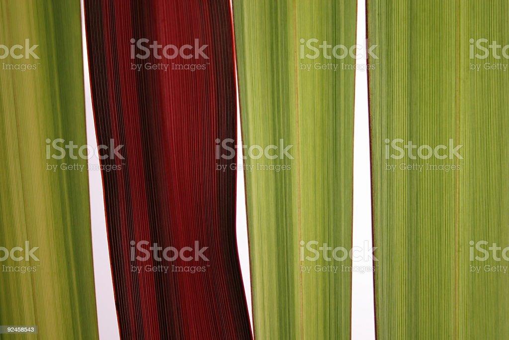 plant blades royalty-free stock photo