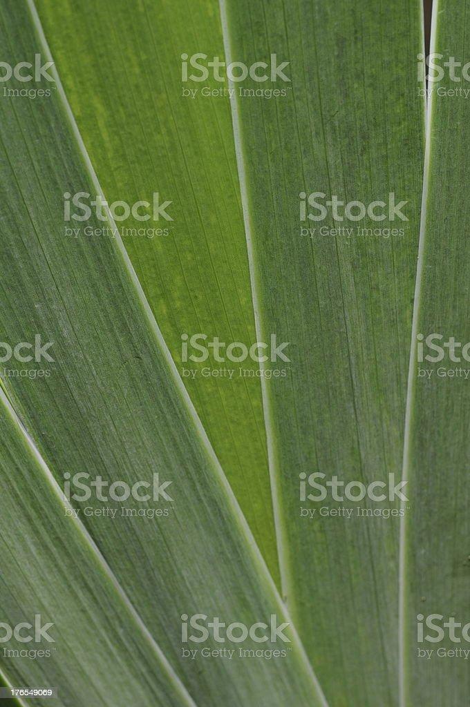 Plant blades, U.K. royalty-free stock photo