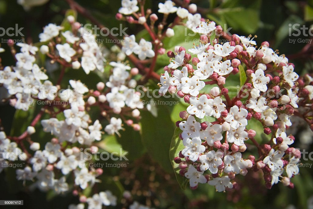 Plant Blossom Close-up royalty-free stock photo