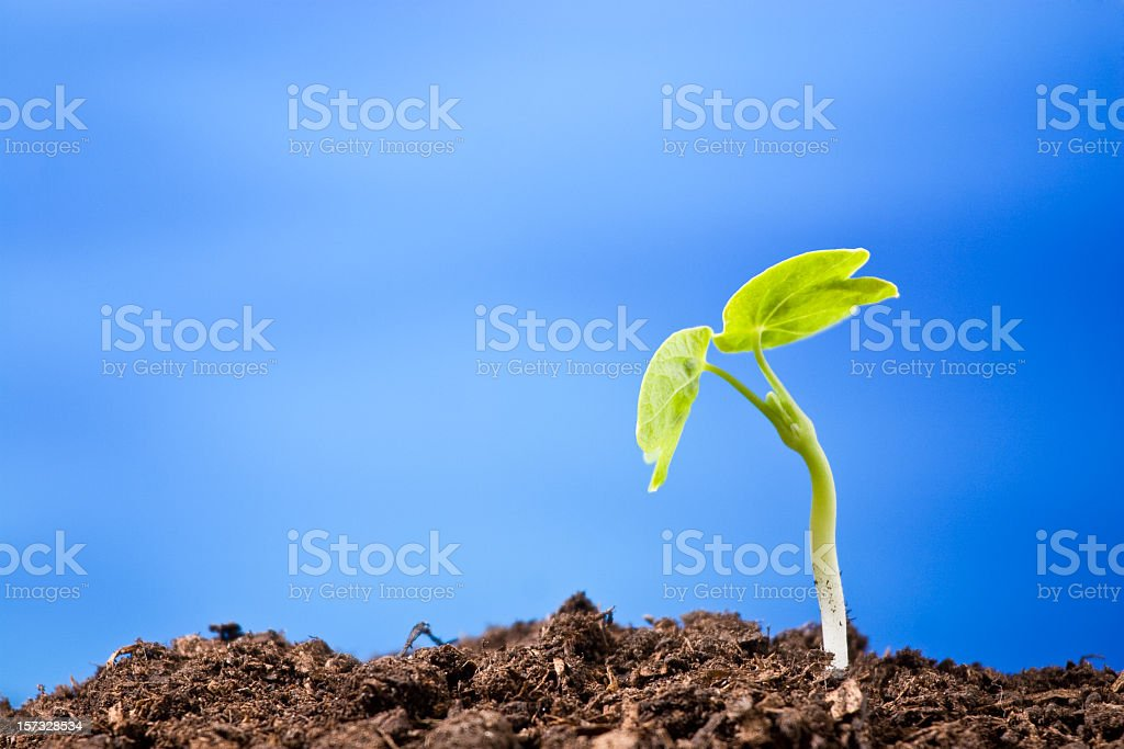 Plant: blue royalty-free stock photo