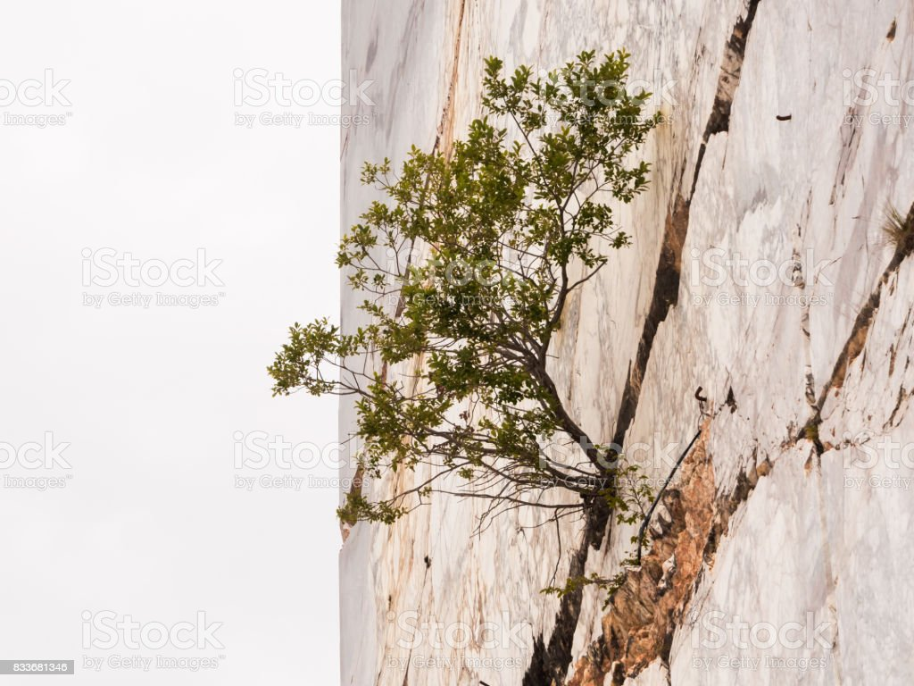 Plant born in a crack of marble mountain - foto stock
