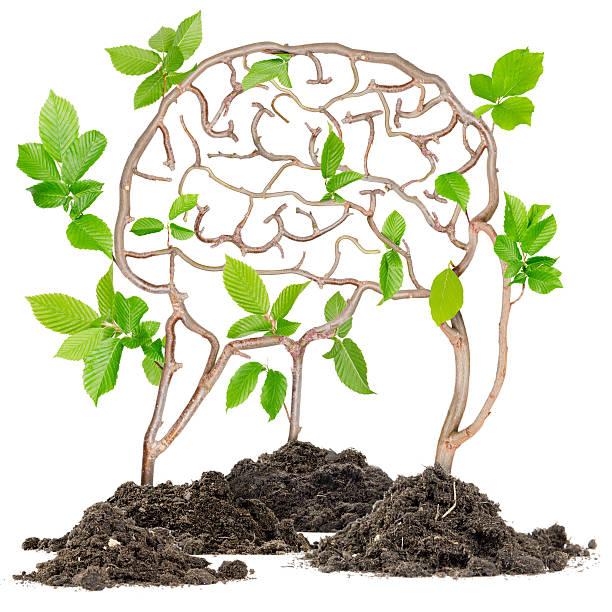 Plant Brain stock photo