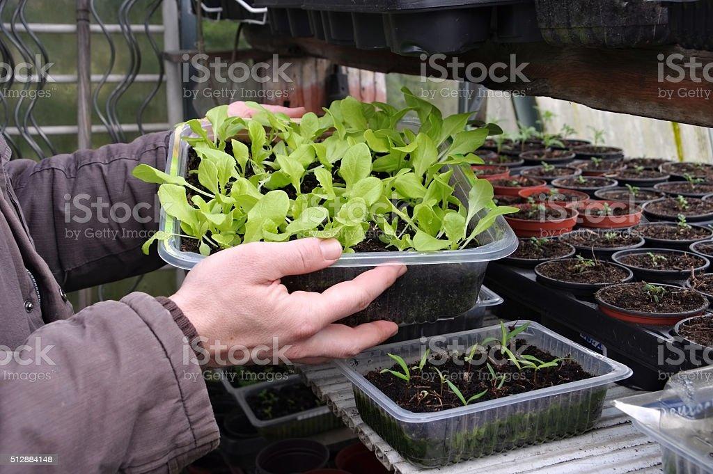 plant breeding in spring stock photo
