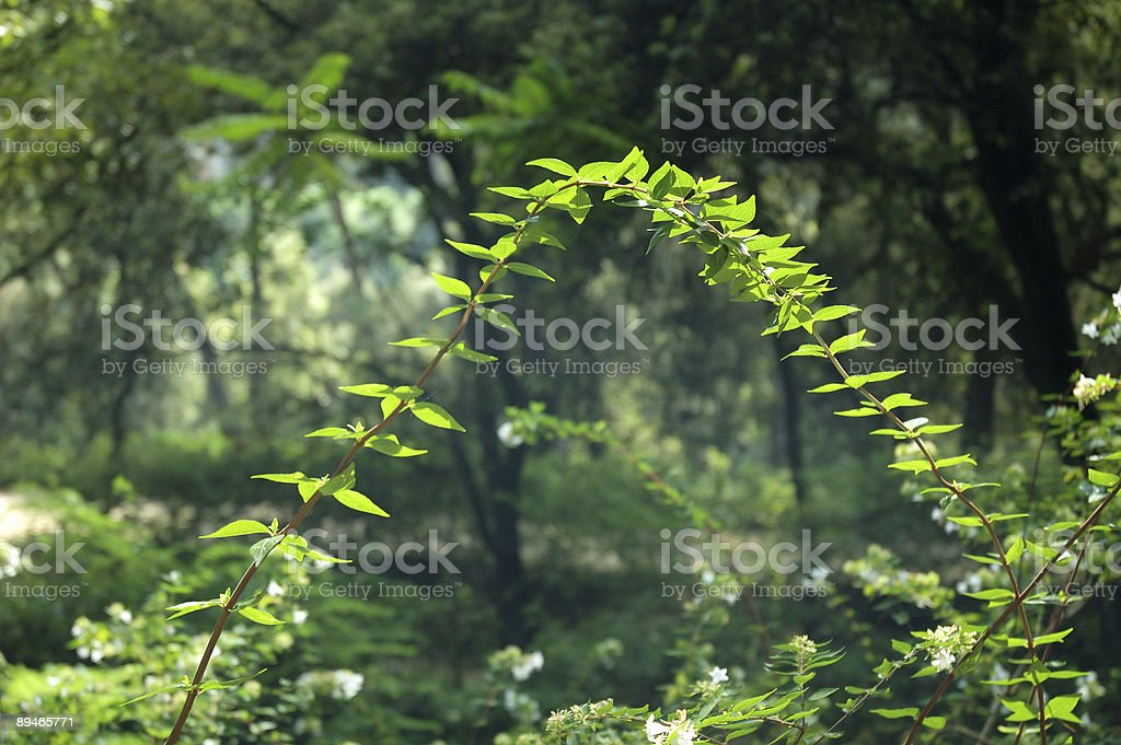 Plant bridge royalty-free stock photo