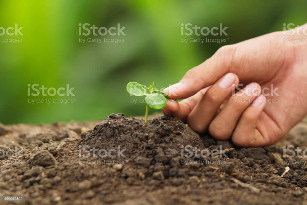 Hand touching leaves of seedling plant with care. Concept...