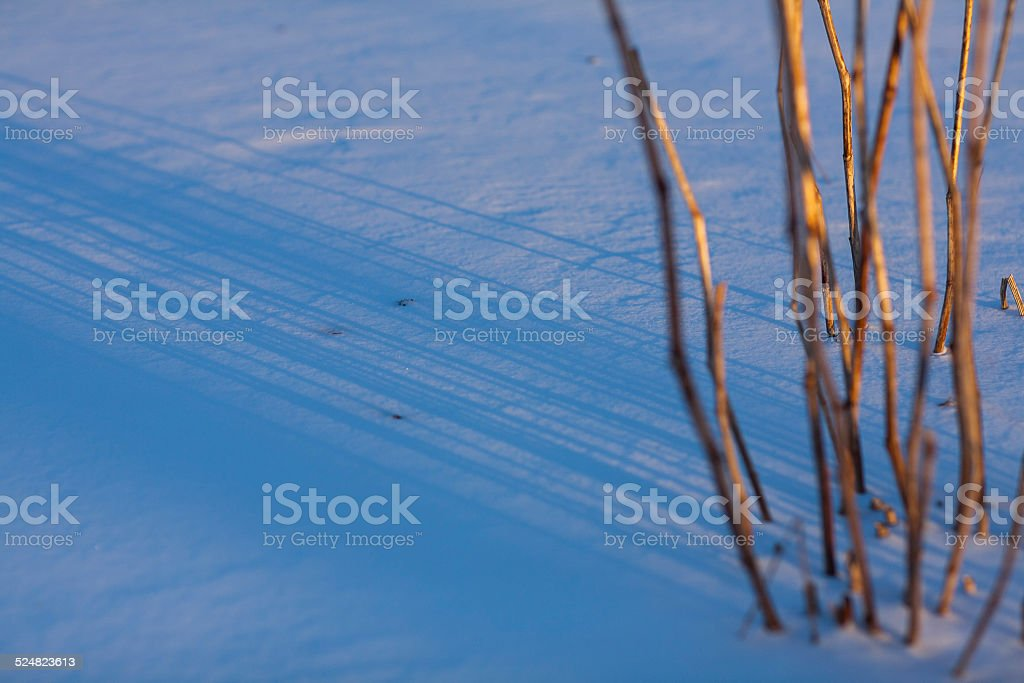 Plant casting long shadows in the snow stock photo