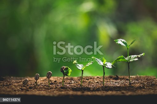 Plant Coffee seedlings in nature Close-Up Of Fresh Green Plant