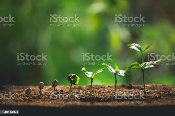 Photo of Plant Coffee seedlings in nature Close-Up Of Fresh Green Plant