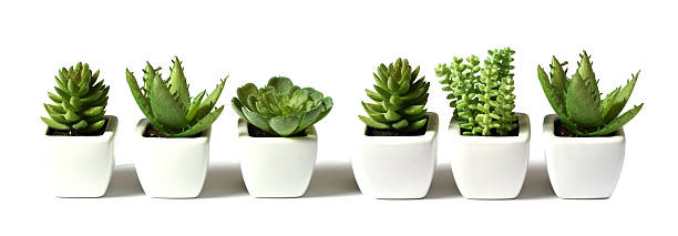 plant collection stock photo