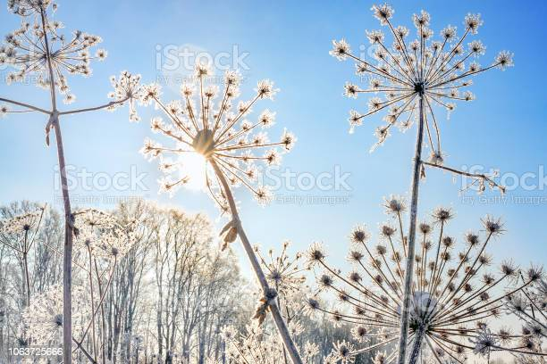 Photo of plant covered with snow against blue sky