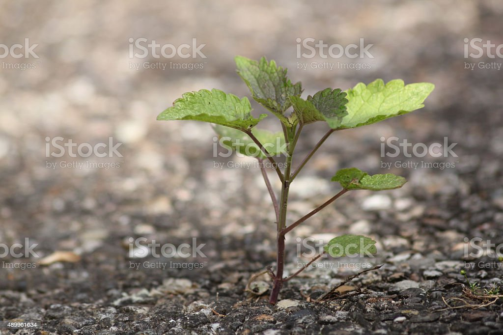 Plant emerging from the concrete stock photo