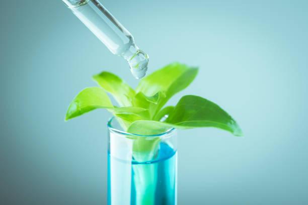 Pflanzenexperiment im Reagenzglas – Foto