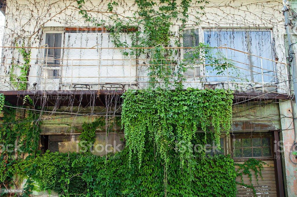 Plant facade stock photo