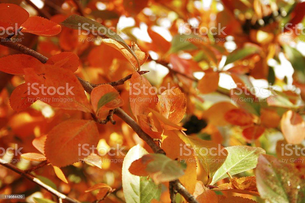 plant fantasy royalty-free stock photo