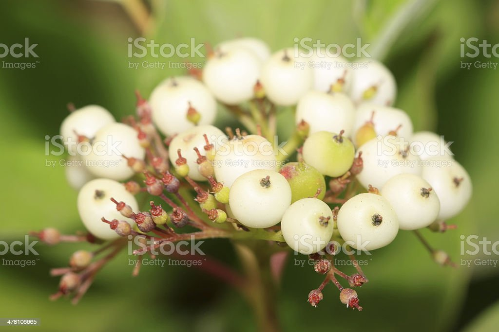 plant fruits royalty-free stock photo
