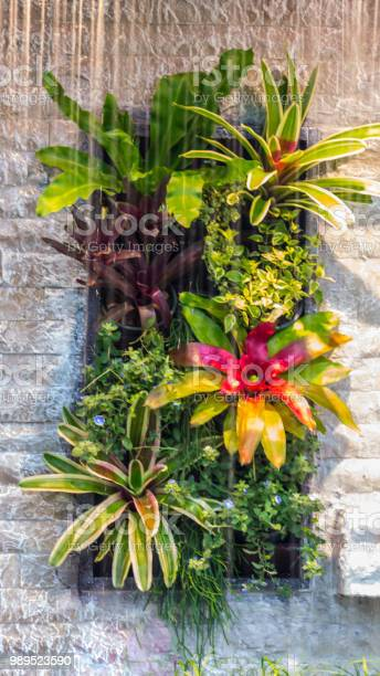 Photo of Plant garden on stone wall.