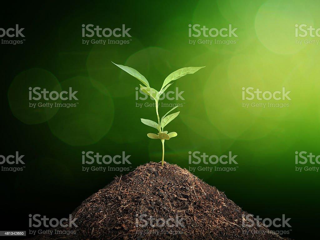 Plant grow  , Ecology concept stock photo