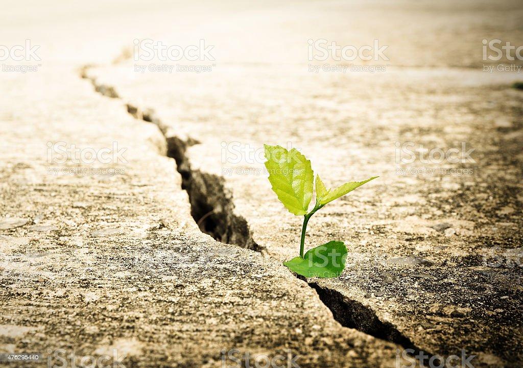 Planta crescendo na rua, ecologia conceito - foto de acervo