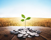 istock Plant growing from a bunch of dollar cent coins 495389864