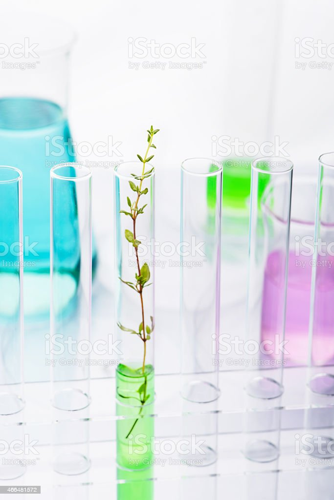 Plant growing from a glass vial in a row of empty vials stock photo