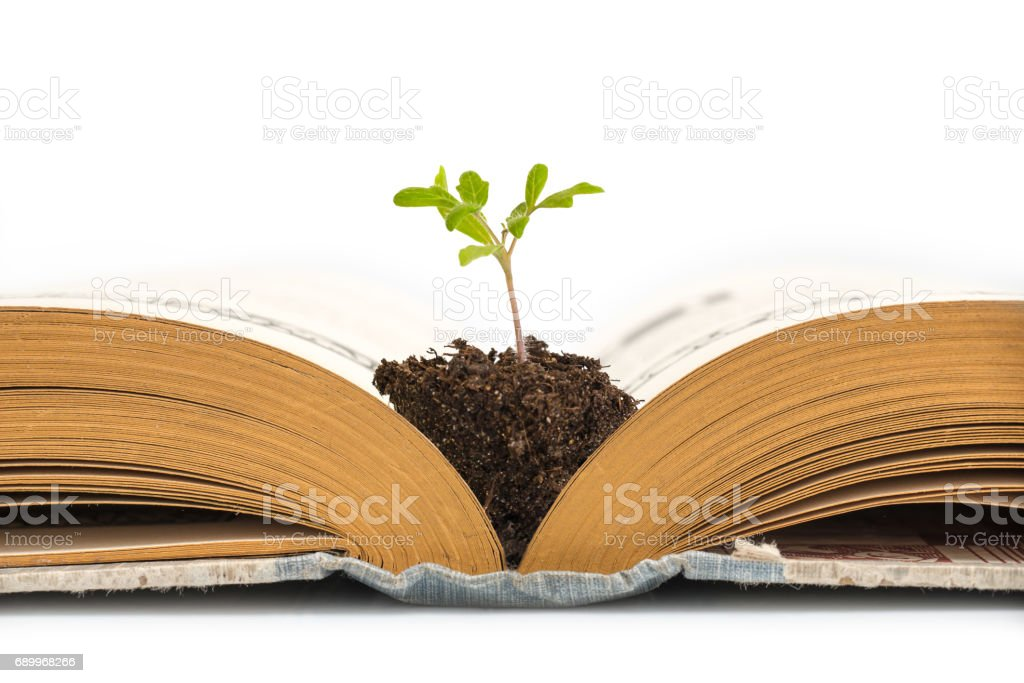 Plant growing from an old opened book,  isolated on white background, education or recycling concept - foto stock