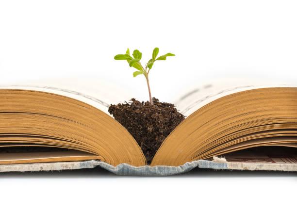 Plant groeit uit een oud geopende boek, geïsoleerd op een witte achtergrond, onderwijs of recycling concept foto