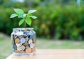 istock Plant growing from coin jar 622446130