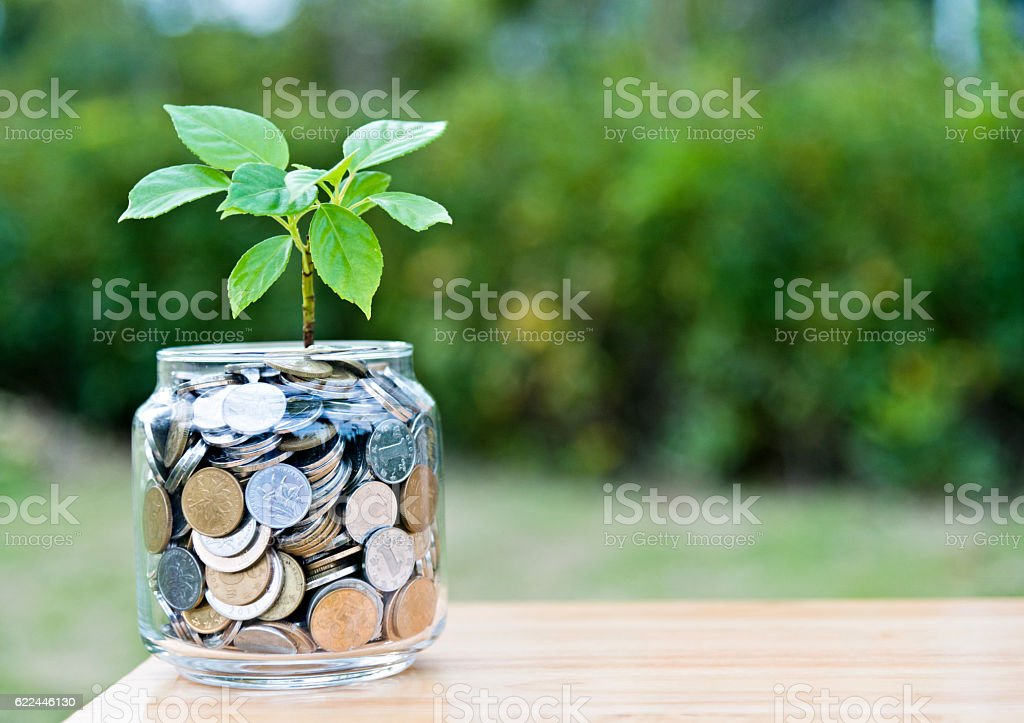 Plant growing from coin jar stock photo