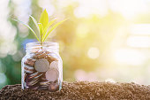 istock Plant growing from coins in the glass jar against blurred natural green background 936147328