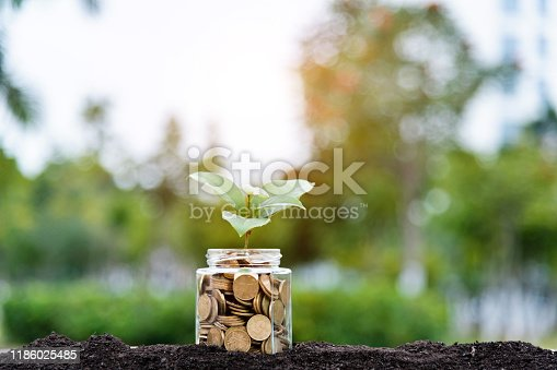 Plant growing from coins jar.