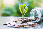 istock Plant growing from coins outside the glass jar on blurred green natural background for business and financial growth concept 921527422