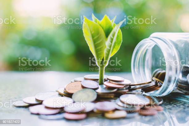 Plant Growing From Coins Outside The Glass Jar On Blurred Green Natural Background For Business And Financial Growth Concept - Fotografie stock e altre immagini di Affari