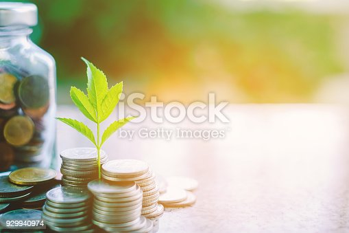 Plant growing from coins outside the glass jar on blurred green natural background with copy space and sunlight effect for investment, business and financial growth concept