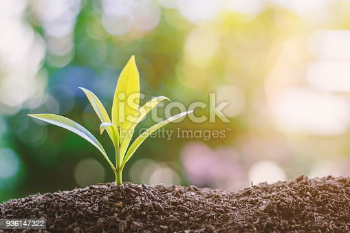 istock Plant growing from soil against blurred green natural background 936147322