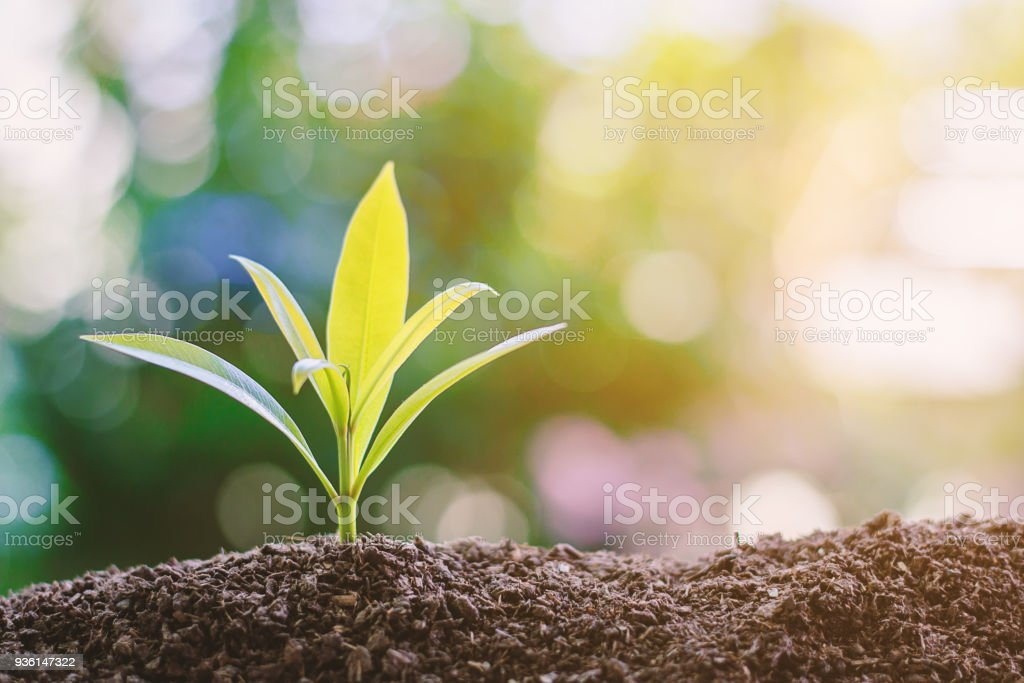 Plant growing from soil against blurred green natural background stock photo