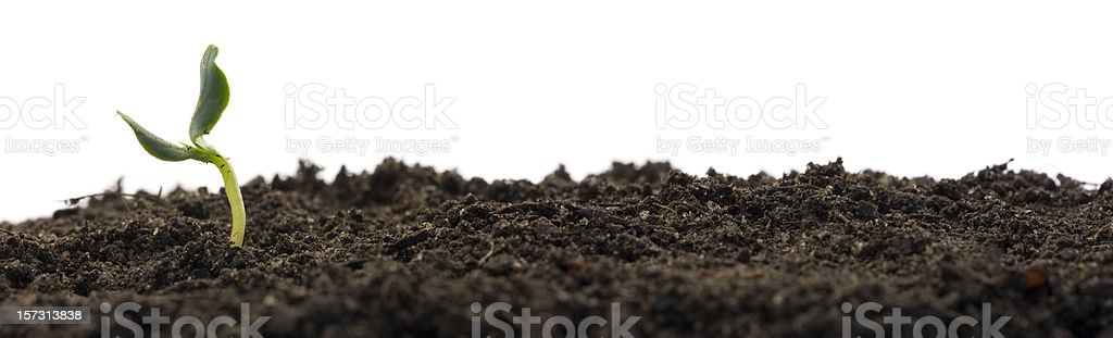 Plant growing from soil royalty-free stock photo
