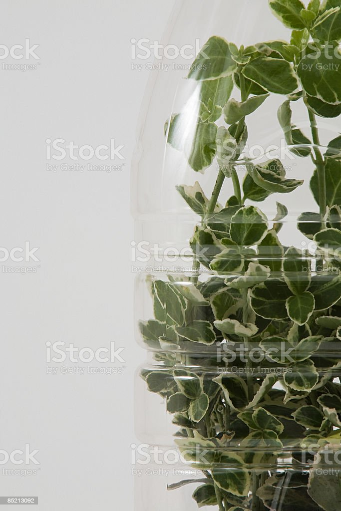 A plant growing in a bottle royalty-free stock photo